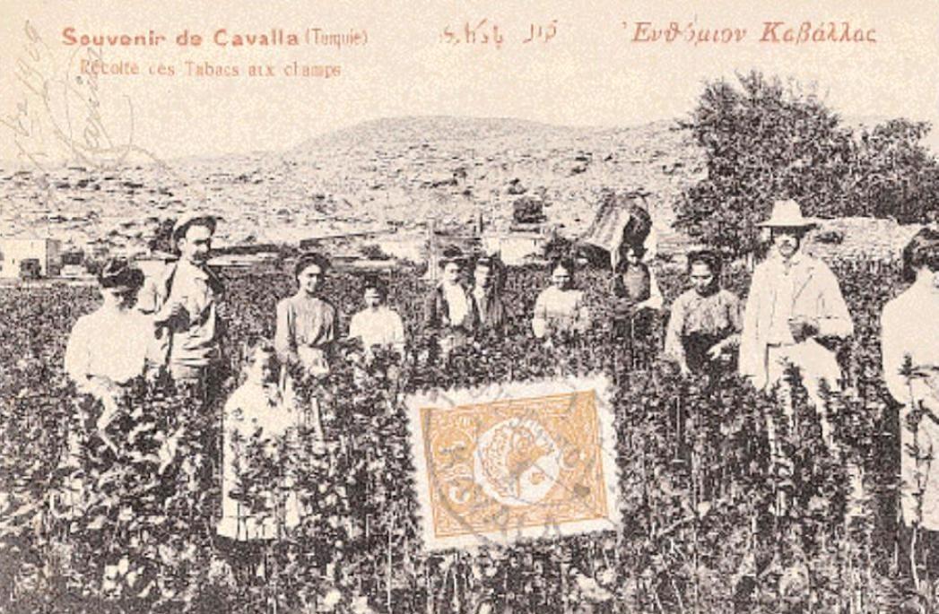 Καπνοχώραφο στην περιοχή της Καβάλας στις αρχές του 20ου αιώνα. Φωτ. συλλογή Αντώνη Σ. Μαῒλλη.